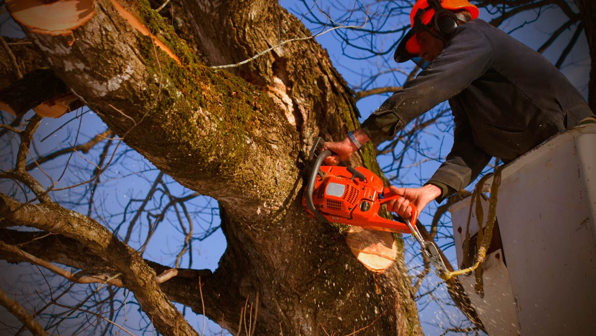 Tree Services in Houston TX