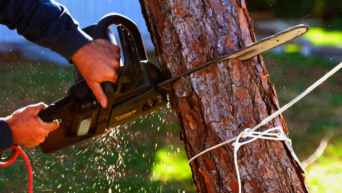 Tree Services in Houston