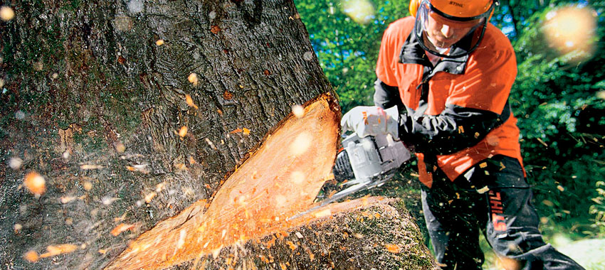 JNE Tree Services Solving Your Tree Removal Needs