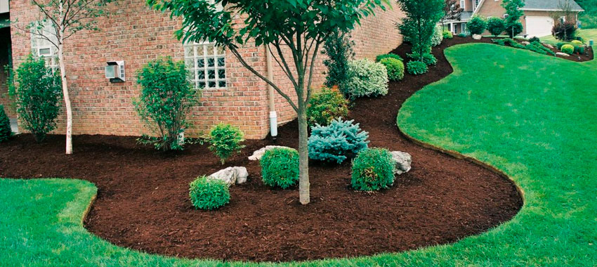 JNE Tree Services: Get Proper Tree Fertilizing in San Antonio TX