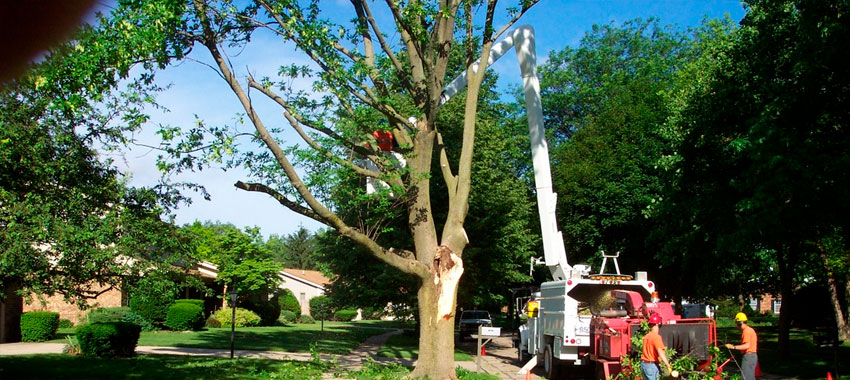 JNE Tree Services-Tree Trimming in El Paso TX