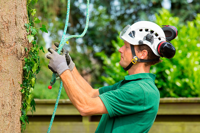 JNE Tree Services—Tree Care Experts in Texas