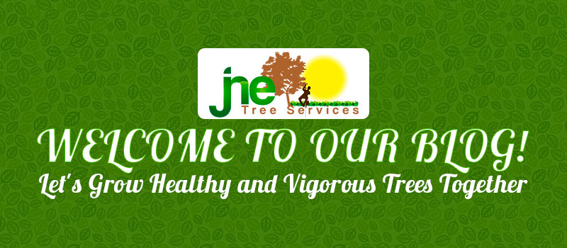 JNE Tree Services—Tree Care and Tree Services