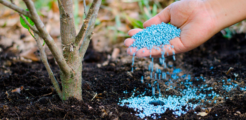 Provide the Ideal Tree Fertilizer