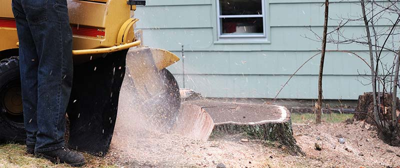 Technician Delivering Stump Grinding Services in Conroe TX