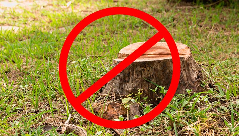 Tree Stump on Green Grass in the Garden. JNE Tree Services Removes Them
