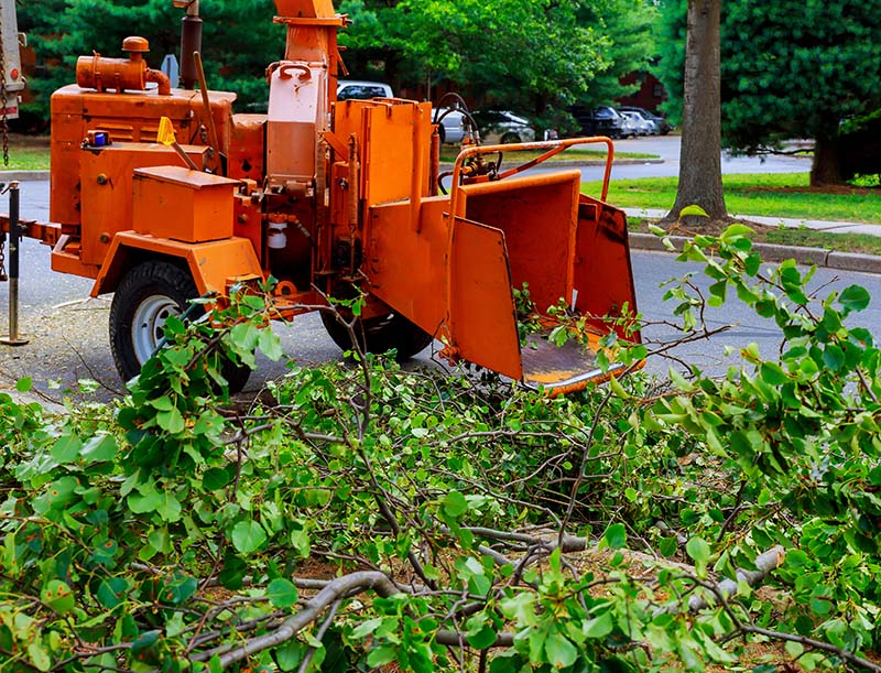 Wood Shredder Chipper Machine Used for Tree Removal Service