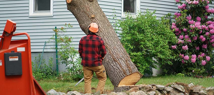 Worker Removing Tree in Residential Area— Tree Services in Conroe TX