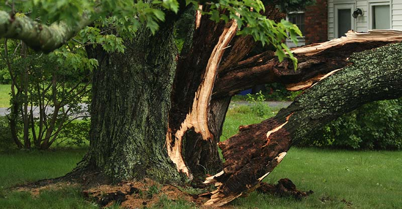 Heavy Storm Damage on a Tree—Signs It Needs Removal